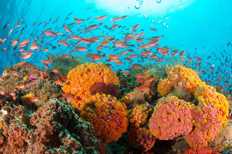 Bali - Komodo (Benoa - Labuan Bajo)